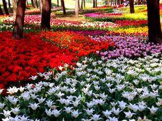 Paisajes con flores naturales - Fotografias y fotos para imprimir