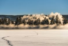 Yesterday ended as epically as it began (see my earlier post?) As we made our way out of the park the setting sun lit up this line of trees and steam from geothermal activity - a single line of animal tracks lead the way to this scene.  #iloveyellowstonenp #YellowstonePledge   Captured with the #Sony #A7RII and Canon 70-200  EXIF: Exactly the same as the morning shot posted earlier.