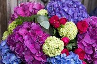 Flowers have a language of their own. Different flowers hold different…