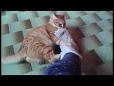 Gaspare VS foot! :D - YouTube