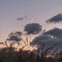 New Nature Art Photography The Moon Ideas Into The Wild, Nature Aesthetic, Aesthetic Photography Nature, Summer Aesthetic, Art Photography, Pretty Sky, All Nature, Aesthetic Pictures, Aesthetic Wallpapers