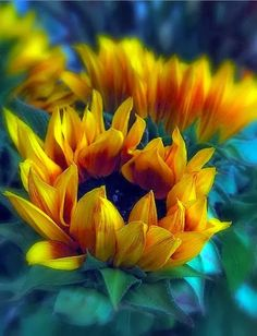 """Sunflowers"" by Jessica Jenney"
