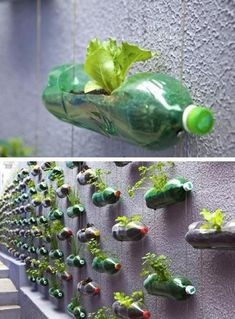 """How to Recycle Plastic Bottles for Outdoor Home Decorating and Garden Design A cool way to grow herbs AND recycle! Lots of great ideas for elementary classrooms too 😉 """"plastic recycling for garden design and house exterior decorating"""" Plastic Recycling, Reuse Plastic Bottles, How To Recycle Plastic, Recycling Plant, Plastic Bottle Art, Ways To Recycle, Eco Garden, Recycled Garden, Recycled Homes"""