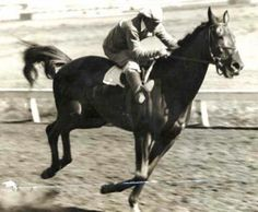 Facts About Seabiscuit Race Horse | SEABISCUIT20 seabiscuit IN A TRAINING RUN AT BAY MEADOWS Photo: File ...
