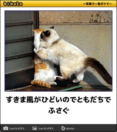 すきま風がひどいのでともだちでふさぐ Cute Baby Animals, Animals And Pets, Funny Animals, Cute Cats, Funny Cats, Cat Memes, Cuddling, Cute Babies, Dog Cat