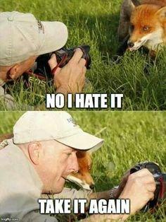 Low self-esteem fox never likes photos of himself