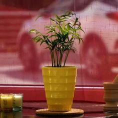 Regrow Vegetables, Planting Vegetables, Planting Seeds, Growing Vegetables, Garden Crafts, Garden Projects, Buy Seeds, Container Gardening, Gardening Tips