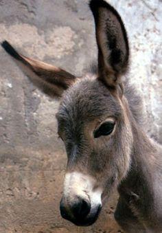 donkeys | testa d 'asino foto immagine