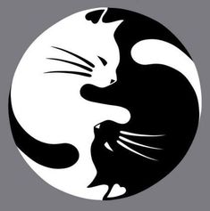 WHAT'S IN THE BOX 1 yin yang cat car decal. DESIGN 2 color options to choose from: white and black (colors may vary). NOTE: White may appear silver- shines white at night because it's made of reflecti Crazy Cat Lady, Crazy Cats, Animals And Pets, Cute Animals, Cat Stickers, Cat Drawing, Rock Art, Cat Art, Cats And Kittens