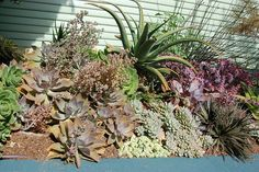 Today the succulent gardens are almost anywhere, in the indoor patios, you can have a succulent plant in your office, in the house, in the outdoor patios, almost everywhere. They resemble great decoration and plus are easy to maintain and grow.  The succulent plants can tolerate dry conditions, low levels of water, high temperatures considering the fact that are very tolerant.