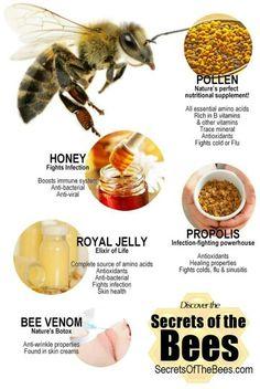 The Best honey, Royal Jelly, pollen, bee bread, propolis from Kyrgyzstan check link Honey Health Benefits, Bee Propolis, Propolis Benefits, Beekeeping For Beginners, Best Honey, Backyard Beekeeping, Bee Pollen, Bee Hives, Bee Friendly