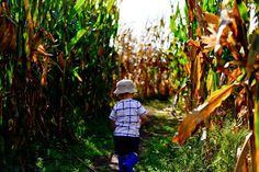 Midwest Vacations, Denver Botanic Gardens, Corn Maze, Pumpkin Farm, Autumn Activities, Central Florida, The Incredibles, Studio, Chicago Chicago