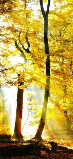 Autumnal Brilliance share moments