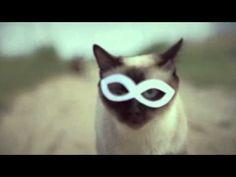 hipster dubstep cat :))