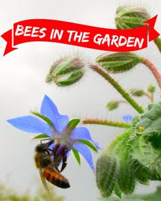 Do we need bees in the garden? If so why? What do they do?