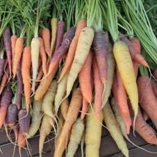 Carrot, Colorful Carrot Mix  Quick Facts