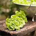 What to Plant in Your Spring Vegetable Garden | P. Allen Smith Garden Home
