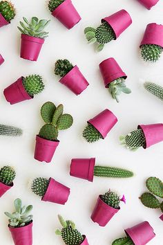 Cactus background by Ruth Black for Stocksy United Cactus background by Ruth Black for Stocksy United Flower backgrounds