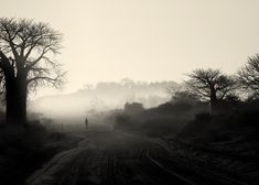 This fine art print collection reflects the positive mood of the African people and the undeniable sense of rural lifestyle. Photography Gallery, Photography Portfolio, Fine Art Photography, Landscape Photography, Baobab Tree, Great Shots, Photographic Prints, Black And White Photography, African