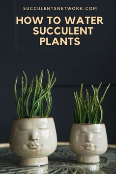 Watering is the major issue for succulents. If you overwater, no matter how good your soil mixture you can kill the plant easily. This free guide will help you to learn proper watering methods! Watering Succulents, How To Water Succulents, Planting Succulents, Plant Guide, Plant Care, Gardening, Plants, Free, Succulents