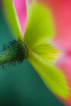 Macro Poppy Microscopic Photography, Flower Images, Cool Artwork, All Art, Art For Sale, My Images, Starwars, Mother Nature, Poppy