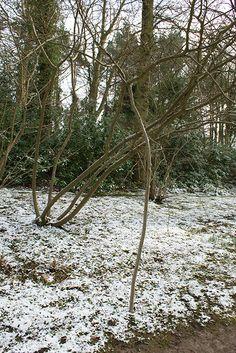 Jonge bomen ondersteunen met snoeihout: duurzaamheid op z'n best!