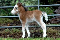 Orphan foal called Prince named after his father
