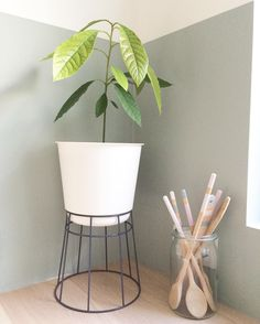 thanks for sharing the b.for up Lisettedejong #planter #home #up #avocado…
