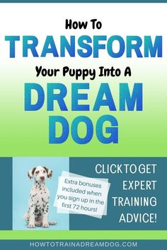 Teach your puppy the foundational skills they need, train them to control their impulses, and stop frustrating puppy behaviors! This lifetime access course, created by a professional certified dog trainer, allows you to train your puppy from the comfort of your own home and at a fraction of the price of traditional in-home dog trainers. Click to sign up for the course today! #dogtrainer #puppytraining #HowToTrainADreamDog