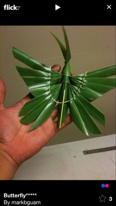 Palm fond art