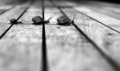 Why did the snail cross the road?