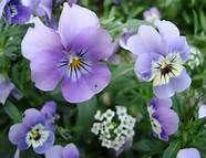 fleurs - Bing Images