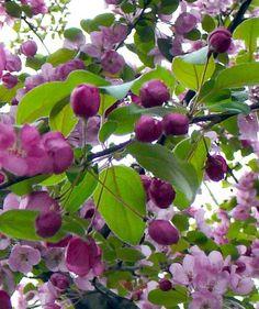 40 Flowers Ideas Flowers Plants Planting Flowers