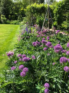 Die Hitparade der Blumenzwiebel: Der Herbst ist da – nach einem Sommer, der eigentlich keiner war. Dennoch: Die Gartenfreunde blicken schon ins kommende Jahr, denn jetzt ist Pflanzzeit für die Blumenzwiebel. Mehr dazu hier: http://www.nachrichten.at/freizeit/haus_garten/Die-Hitparade-der-Blumenzwiebel;art123,1496622 (Bild: Ploberger)