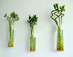 Set of 3 rooting plants wall glass vase//cylindrical glass wall terrariums//indoor planters for decorated art wall by NewDreamWorld on Etsy https://www.etsy.com/listing/253277543/set-of-3-rooting-plants-wall-glass