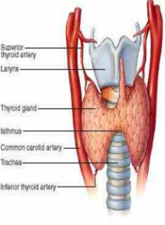 If you've ever dealt with a thyroid imbalance or just a thyroid issue in general, you know how difficult it can be on your running. Here's some helpful research on how training impacts thyroid levels: http://runnersconnect.net/running-training-articles/thyroid-disorders-in-runners-a-look-at-the-impact-of-training-on-thyroid-levels/