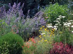 Xeriscaping in Colorado....yarrow, penstemon, hyssop, jupiter's beard....I miss all these plants from my old garden! Must plant them again : )