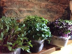aromatic herbs #chefs #experience #food #different #restaurant #bucharest