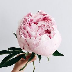 A few fun links from around the web. #pinkpeonies