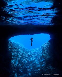 Freediver at the entrance to Mariner's Cave!  This is another gem of Vava'u... a…