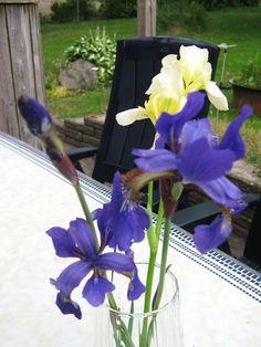 iris for faith and friendship