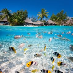 Thinking of a Tahiti holiday & not sure where to start? TravelOnline are the experts in planning, building and booking comprehensive holidays in Tahiti. We offer instant quotes, personalised booking services & up to off package deals. Beautiful Places To Travel, Cool Places To Visit, Beautiful Beaches, Beautiful Vacation Spots, Vacation Places, Dream Vacations, Bora Bora, Nature Architecture, Tropical