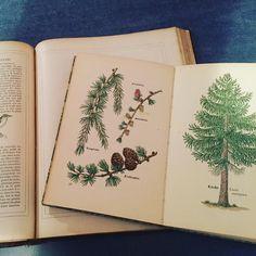 古い植物図鑑 フランスで手に入れたけどドイツ語  #papier #livre #plante #chromolithograph #紙もの #植物図鑑 #ドイツ語の本 #古書 #GalleryIchi #Gallery壹