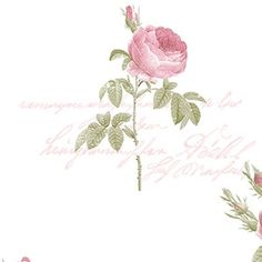 Pink rose #wallpaper from Wallcoverings 2U adds a little color and style to any #homedecor that needs a rose touch. More designer floral #walldecor at -> http://wallcoverings2u.com/25-flower-garden