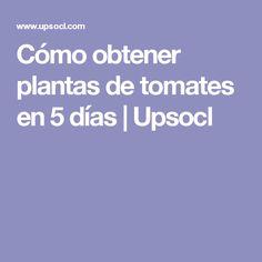 Cómo obtener plantas de tomates en 5 días | Upsocl