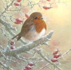 Christmas Scenes, Christmas Animals, Christmas Crafts, Xmas, Robin Bird, Winter Scenery, Winter Pictures, Winter Art, Drawing Board