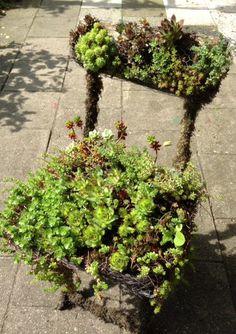 Blijft leuk  met vetplantjes laten begroeien