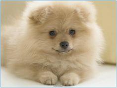 Маленькая собака  #Россия #породы #йорк #джек #терьер #животные #щенки #собаки #щенок #Москва #Тула #Серпухов #Добро #Осень #Самара #Спб #Питер #Хабаровск #Курск #Казань #animals #animal #pet #pets #dogs #doggy #dog #moskow #russia #cute #terrier