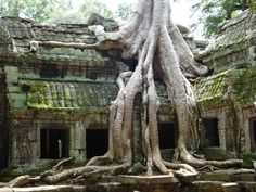 Cambodia - Angkor - Ta Prom.  Is it just us nerds, or does this not remind you of the Forest Temple in The Legend of Zelda, Ocarina of Time?