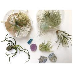 Air plant care  @houseplantjournal has a brilliant article on caring for air plants called 'Tillandsia Parenthood 101' and the link is in his bio right now. His summary: Light first ask questions later. I highly recommend popping over and having a read (and follow him too if you're a plant lover!)